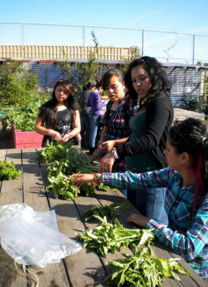 This picture is of Richmond youth gathering basil from a local garden