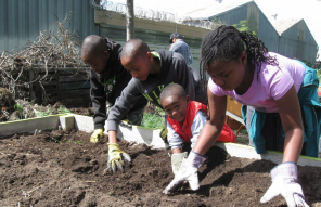 This pictures is of four Richmond youth tilling soil at Adams Crest Farm