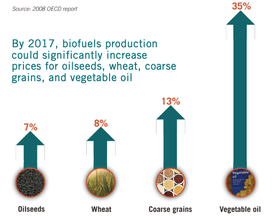 This infographic showcases how By 2017, biofuels production could significantly increase prices for oilseeds, wheat, coarse grains, and vegetable oil